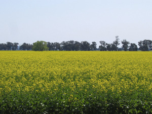 Crop that: biodiesel can be best of all worlds